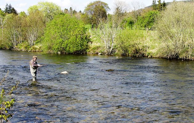 Flyfishing with the Spring Olive