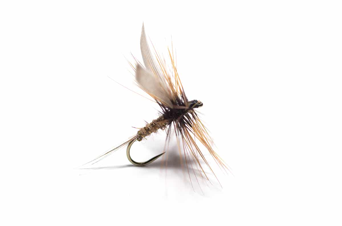 Gold Ribbed Hare's Ear Dry Fly