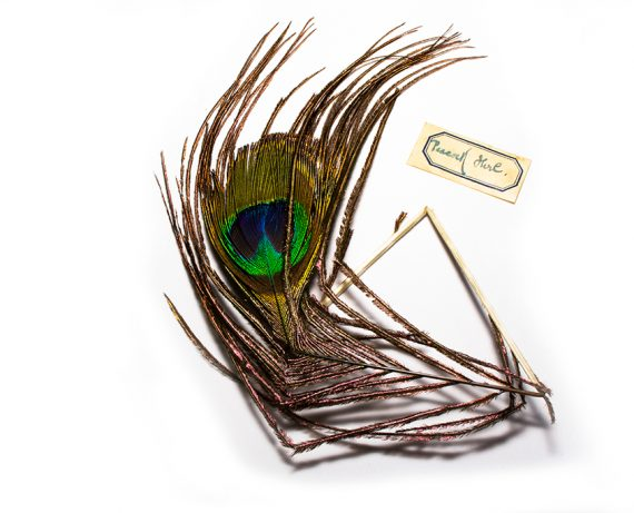 North Country Spiders Flytying Materials Peacock Herl