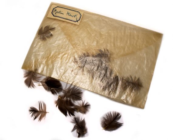 North Country Spiders Flytying Materials Merlin/Blue Hawk Hackles